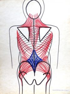 back vew of muscles of neck, scapulae and torso in red, with lumbodorsal fascia in blue